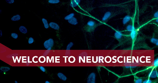 MSc Neuroscience banner